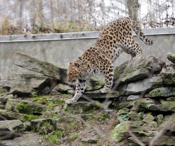 Loomaaia kaamerad