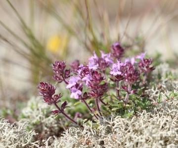 TÄNA! Tartu Ülikooli botaanik Elle Roosaluste jagab Loodusmuuseumis taimetarkuseid