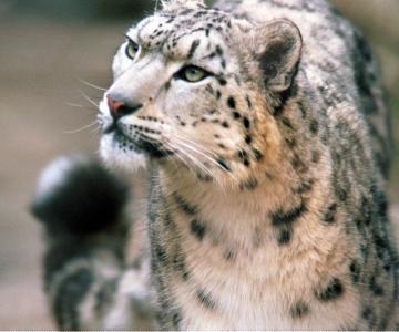 Avasta hilisõhtusel ekskursioonil loomaaia loomade salaelu