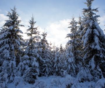 Anna oma hääl Eesti metsade kaitseks!