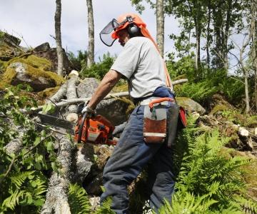 Looduskaitsjad: riik plaanib kaitsealadel raietingimusi leevendada