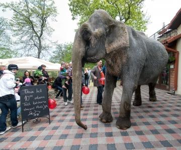 Riigikogu keelustas loomatsirkuse