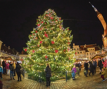 KUUSKEMAA: Esimene jõulupuu toodi ikkagi Tallinna Raekoja platsile