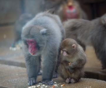 FOTOD JA VIDEO! Loomaaia ahvid said kingitusi ja jääkaru Friidale sooviti juubeliõnne