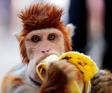 Uuring: banaani, pähkleid ja riisi peetakse täisteratoodeteks