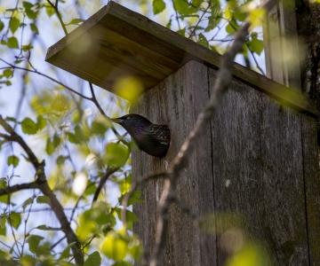 Keskkonnaamet: puu või põõsa mahavõtmist ei tohi planeerida lindude pesitsusajale