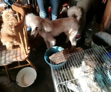FOTOD JA VIDEOD: Loomakaitsjad päästsid Harjumaal olevast kutsikavabrikust 38 koera