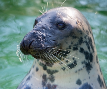 FOTOD JA VIDEO! Loomaaias tähistati hülgepäeva