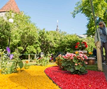 VIDEO! Tallinna Lillefestivali avas Poola kingitus Eestile