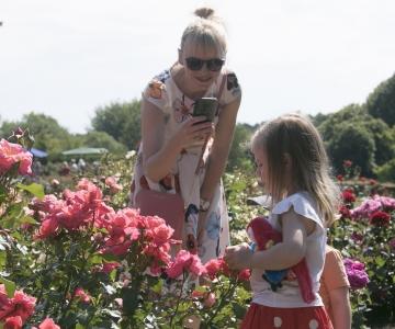 KAUNID FOTOD! Botaanikaaias algasid roosipäevad!