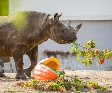 Loomaaed tähistab ninasarvikute päeva