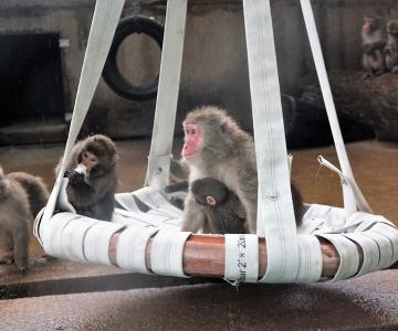 Jaapani makaagid nautisid tähtpäeval mõnuga uut kiike