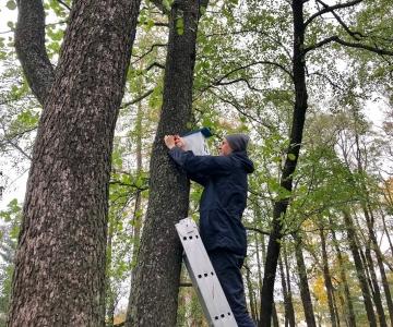 Põhja-Tallinna parkidesse paigaldatakse 100 uut lindude pesakasti