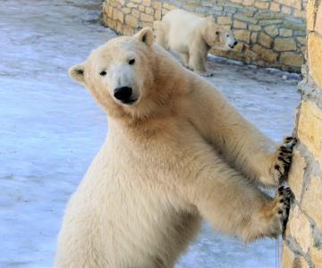 Külasta Eesti Vabariigi aastapäeva puhul loomaaia asukaid