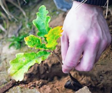 Ratas: tööstuse areng ei tohi tulla Eesti keskkonna ja meie tuleviku arvelt