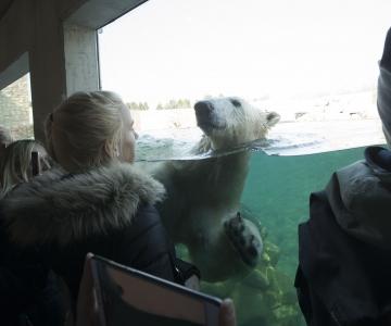 VIDEO: Loomaaed tähistas Tallinna päeva hirvsea skulptuuri avamisega