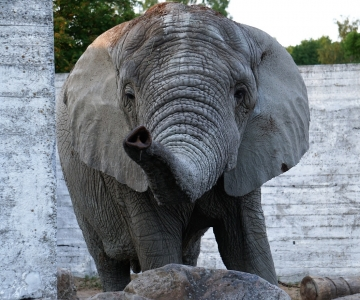 Mõnus soojus lubab loomaaialoomadel pikad päevad õueaedikutes veeta