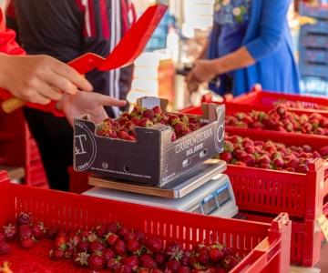 Põllumajandusamet jätkab väidetavate mürgimaasikate juhtumi uurimist