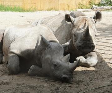 TÄHISTA KOGU PEREGA: Loomaaed tähistab oma sünnipäeva loomade seltsis