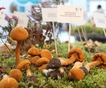 Seenefestival avab Eesti Loodusmuuseumi seenenäituse