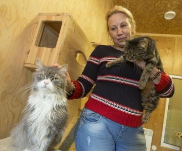 Musta kassi kuul on uue kodu leidnud pea 30 kassi