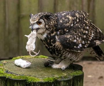GALERII! Tallinna loomaaed kutsus isadepäeval kakkudele külla