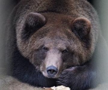 Hingekuu teine nädal algas loomaaias nukrate lahkumistega