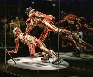 """FOTOD! Revolutsiooniline inimkehade näitus """"Body Worlds"""" nüüd ka Tallinnas"""
