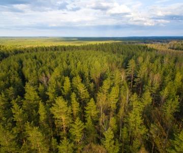 Raport: kliimamuutused ohustavad Eesti metsa tervist