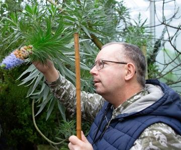 Botaanikaaia banaane ja haruldasi sõnajalgu ootab peagi soojem kodu