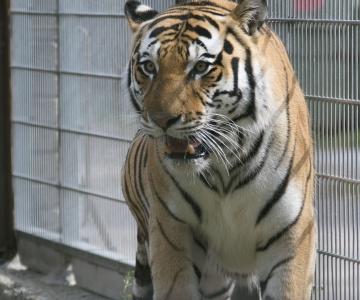 Kaslaste talitajad hoolitsevad loomade eest maskis ja kummikinnastega