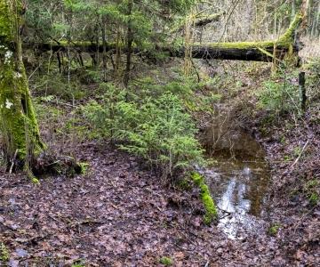 Rohelist külastuspaika valides tasub ka Tallinnas eelistada vähemtuntuid paiku