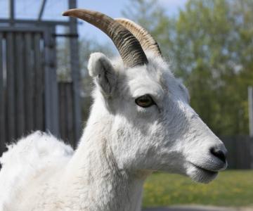 FOTOD JA VIDEO! Tallinna loomaaed avas taas uksed külastajatele