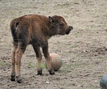 TÄNA! Eesti looduse päev loomaaias