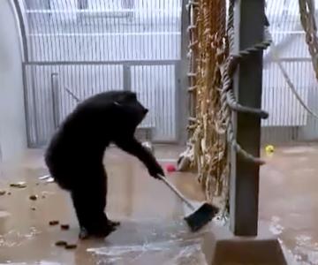 VIDEO! Kui talitaja unustab harja aedikusse...