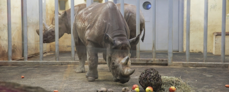 Tallinna loomaaed kutsub rahvast sünnipäevale