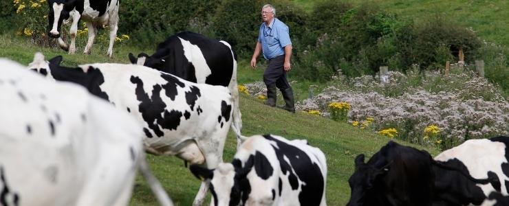 Masstootmine põllumajanduses toob kaasa uue väljasuremislaine