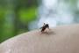 VTA spetsialist: seakatku levik putukate abil on vähetõenäoline