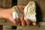 Tartu ülikooli loodusmuuseumist leiti kulda