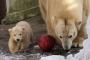 Tallinna loomaaia asukad said mängimiseks bowlingukuulid ja kurikad
