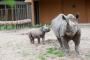 Tallinna loomaaed avaldab ninasarvikubeebi nime loomaaia sünnipäeval