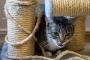 Läänemaal põles kasside varjupaik, võis hukkuda kümme looma