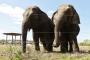 Raport: India elevante ohustab nahanõudlus Hiinas