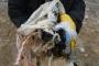 Eestlased on ühed suurimad Euroopa plastjäätmete tootjad