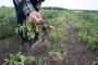 Tarmo Tamm: riik ei jäta põllumehi põuas üksi