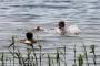 Päästjad otsisid järve joobespäi ujuma läinud mehi