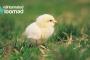Loomakaitsjad kutsuvad tähistama munadepühi puurivabalt