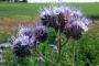 Tallinna Botaanikaaias tutvustatakse mee- ja lõhnataimi