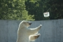 GALERII: 20. juulil kell algab 10 Tallinna Loomaaias jäätisepäev