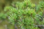 Aasta metsamajandaja on Harjumaa metsaomanik Ardi Allikmets
